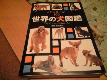 世界の犬図鑑