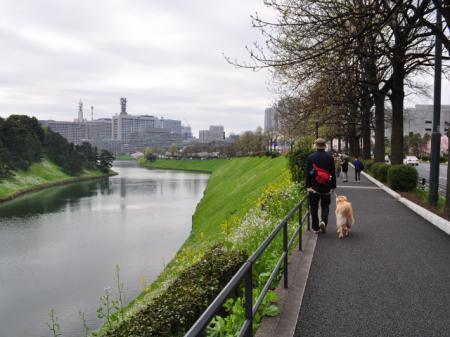 千鳥ヶ淵散歩 025-C