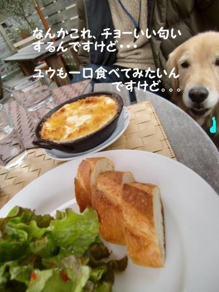 110206 浜松ラン&カフェ+(4)_convert_20110207163852