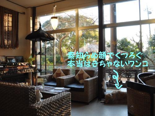 110129,30+伊豆下田&伊豆高原+067_convert_20110215092730