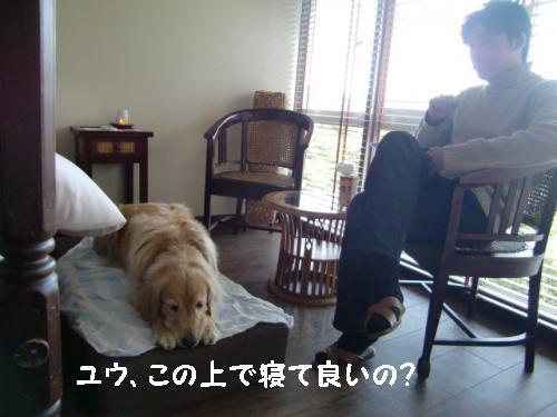 CIMG6524_convert_20110215093433.jpg