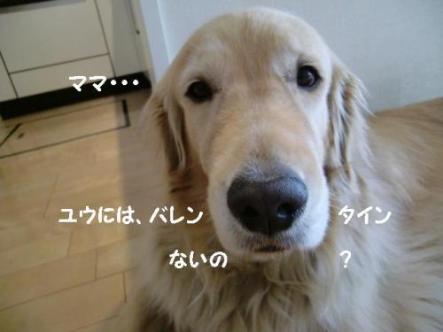 CIMG6596_convert_20110214171837.jpg