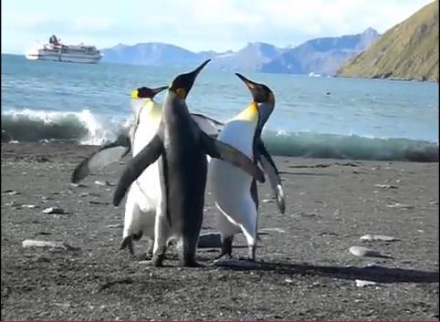 ペンギン 戦い