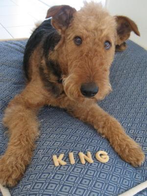 king0745.jpg