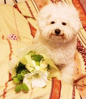 bouquet toss3