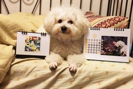 お犬様カレンダー2