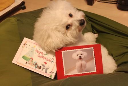 クリスマスカードが届いた♪2