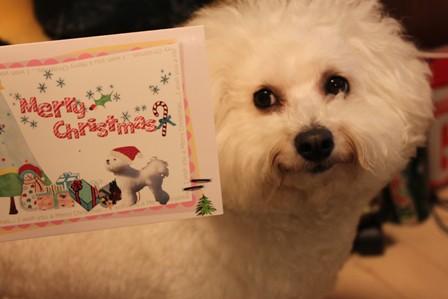 クリスマスカードが届いた♪3
