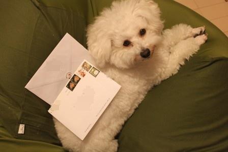 クリスマスカードが届いた♪1