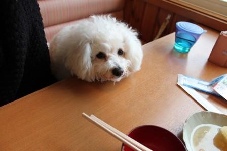 犬連れ那須旅行2