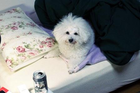 布団と犬2