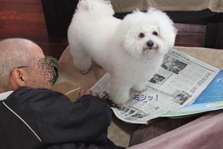 陣取る犬 (4)