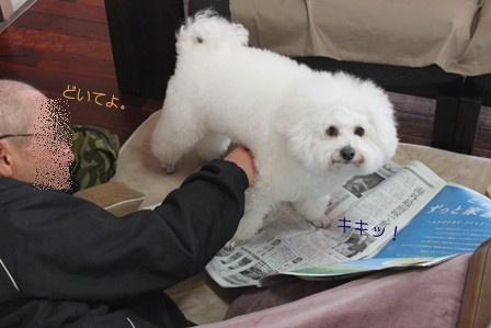 陣取る犬 (5)