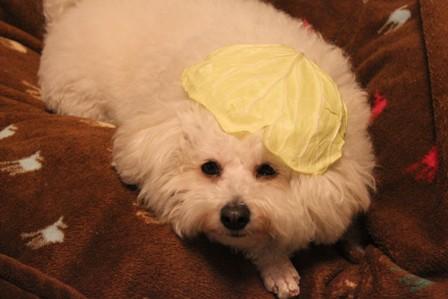 思いつき帽子 (3)