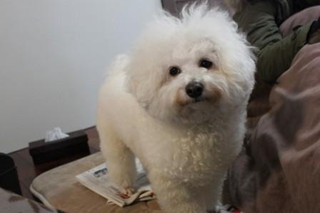 doggy holic (3)