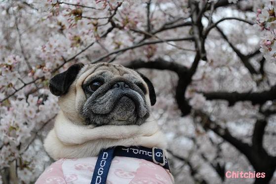 チッチも少しは花を見ているのかしら??