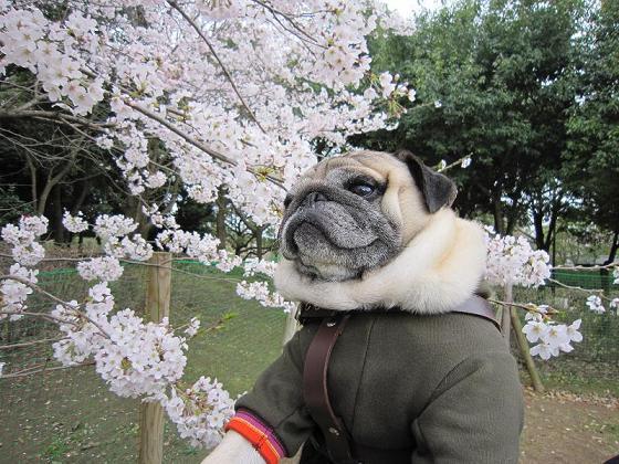 ドッグランの中も花盛りです