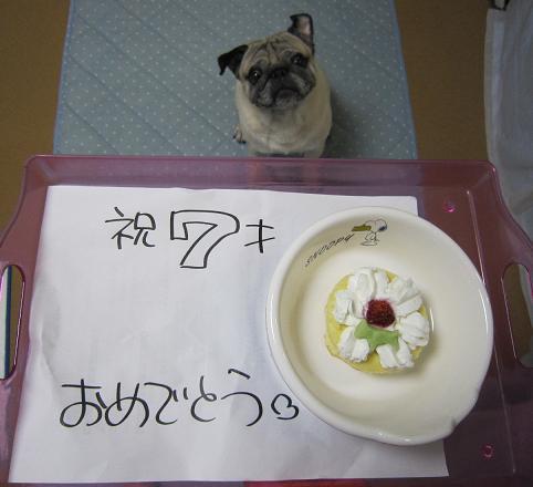 やっとこさケーキが出た~(ダイエット中では?)