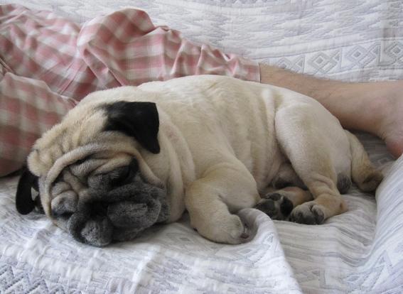 とうたんとソファでお昼寝中、うれしそうだな(-