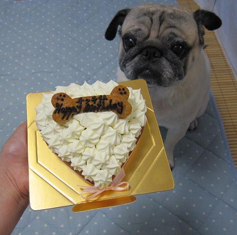 パグ友さんにお誕生ケーキをいただきました!!