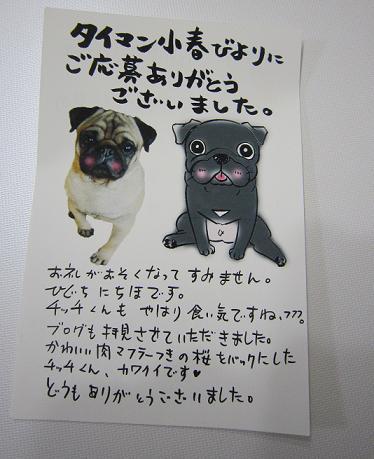 小春ちゃんと乙女ちゃん入りの直筆ハガキが届いた~