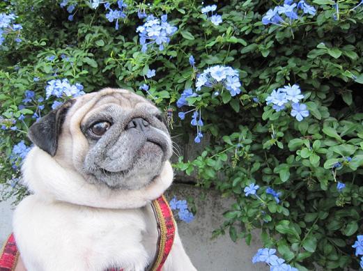 満開だったけど、なんて花だろう??