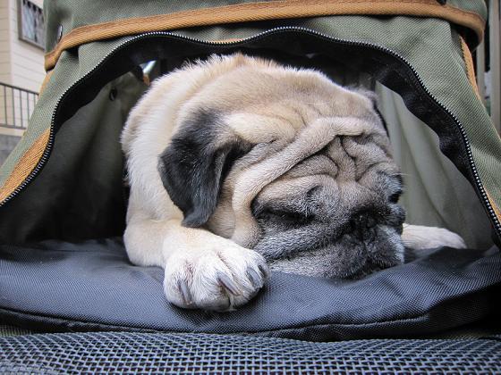 カートの中で寝ちゃったチッチ君。