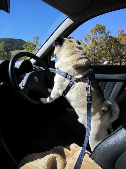 運転手がいなくなると、すぐにこんな感じ・・・