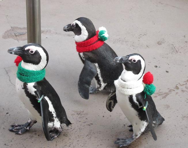 ペンギンの行進~