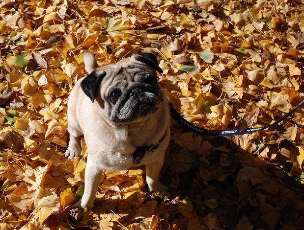 落葉だってキレイじゃんね!