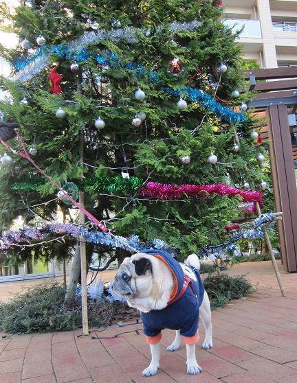 大きなクリスマスツリーの前で(主役よそ見)