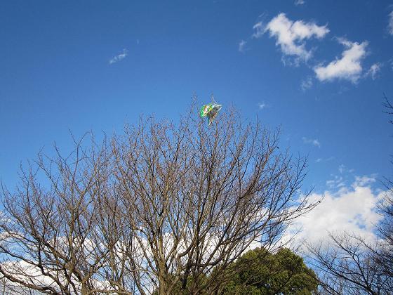 お正月を待たずして木に引っ掛かってしまった可哀そうな凧