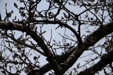 2010-03-26_EOS 7D_0139