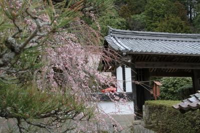2010.4.10.「能救山岩屋寺、花祭り」、3