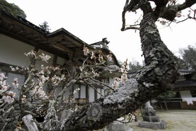 2010.4.9.「徳雲寺」、8
