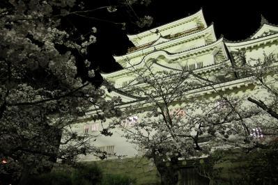 2010.4.2.「福山城の夜桜・花見」、1