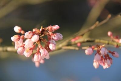 2010-03-29_EOS 7D_0176、2010.3.29.「世羅郡世羅町甲山の桜」、
