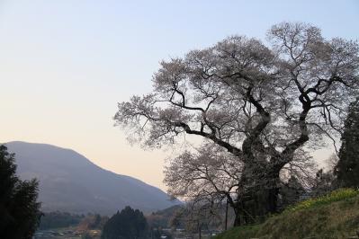 2010.4.17.庄原市東城町小奴可「要害桜」、9