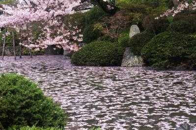 H20.4.井田撮彩、「京都・清水寺、桜」、『』、