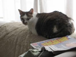 日食(2012/5/21)のネコ