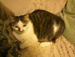 ソファに猫