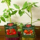 中玉トマトの、フルーツルビーEXと、フルーツゴールドギャバリッチ。各398円。