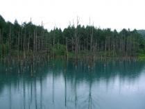9:02 青い池 ・・・ 雨でしたので傘をさして回りました