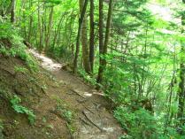 11:00 下山中。山側の反対側は落ちると怖い斜面。