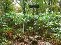 9:20 山頂への看板で曲がったら、すぐ山頂です。草木に囲まれています。