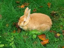 9:45 シマリス公園に1羽だけウサギ発見。