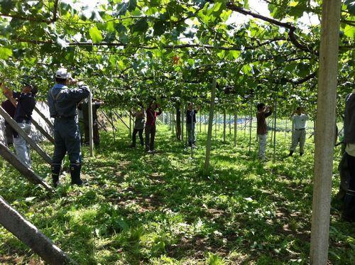 山梨ぶどう狩り収穫時期シーズン農園選び方