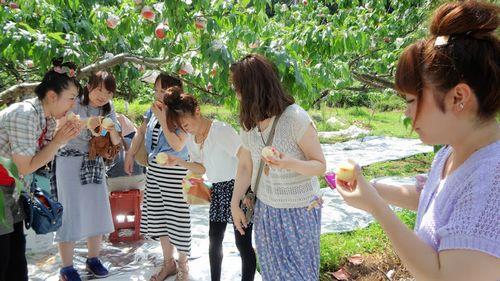 山梨果物フルーツ桃狩りお土産