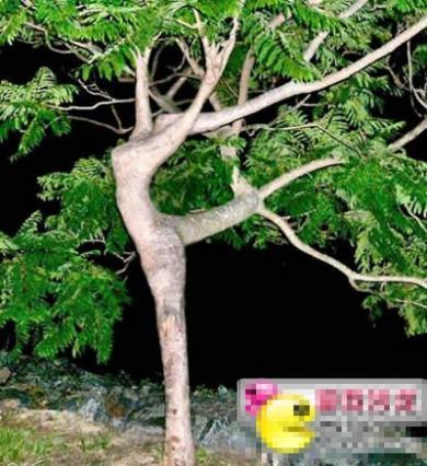 n2o_1211_629790_1(1997)s.jpg