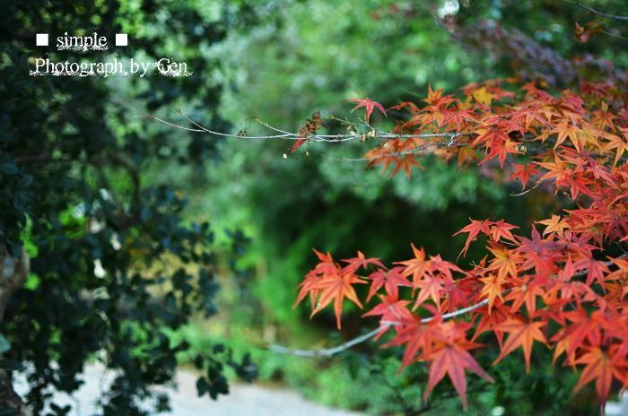 2011_kouyou.jpg